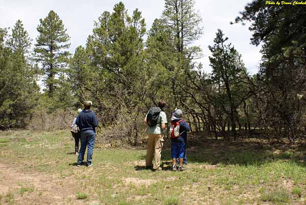 Ponderosa pines surround Summit Lake and make great viewing for the Birding Festival