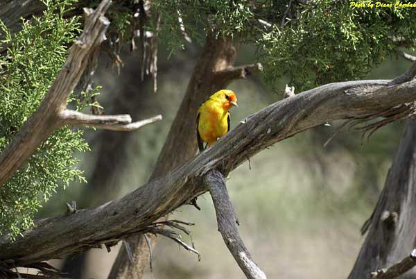 Another colorful bird viewed during the Birding Festival