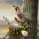 chris_vest_quail