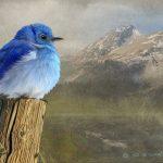 cortez_cultural_center_chris_vest-bluebird